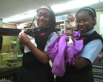 GUINEA PIG FRIENDS!